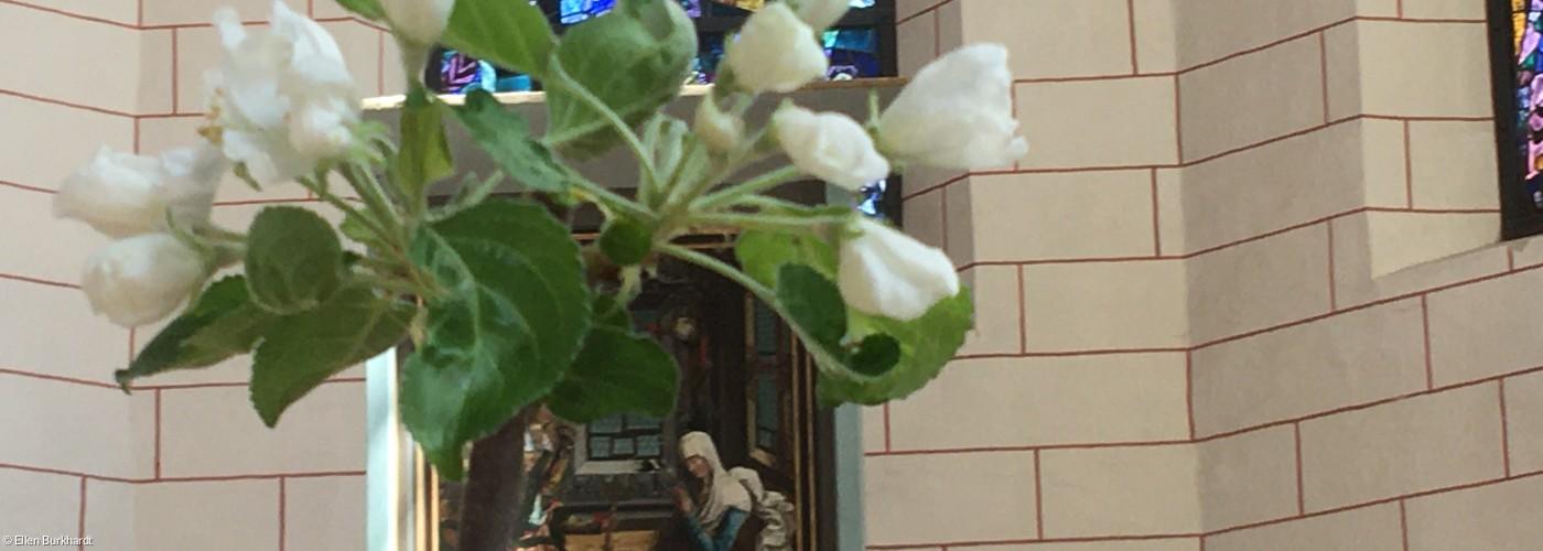 Ein blühender Apfelbaum in der Kirche